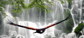 Foto majestuosa ave - volando libre