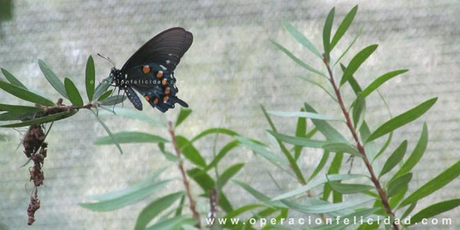 Foto hermosa mariposa - Cambios-Transformación