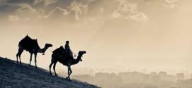 Camellos en el desierto