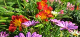 Flores-jardin-vivir-enamorado