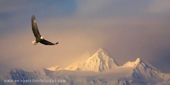 Aguila-volando-sobre-montanas-Eres-un-aguila