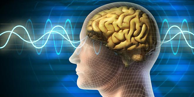 El cerebro y sus secretos