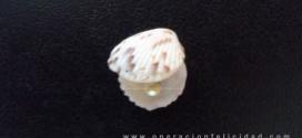 Foto de ostra con perla - Reflexión La Perla