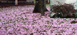Foto hermoso Roble florecido - Artículo El Roble