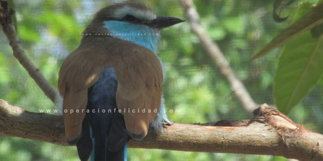 Foto hermosa ave - Reflexión Debajo higuera