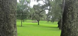 Sembrar semilla - jardín cosecha - Foto árboles