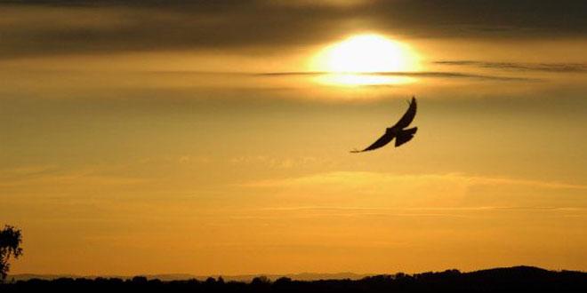 Aguila-volando-parque-Elevate