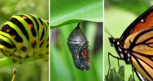 Transformacion-mariposa-Cambio